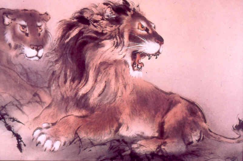tigre095.jpg